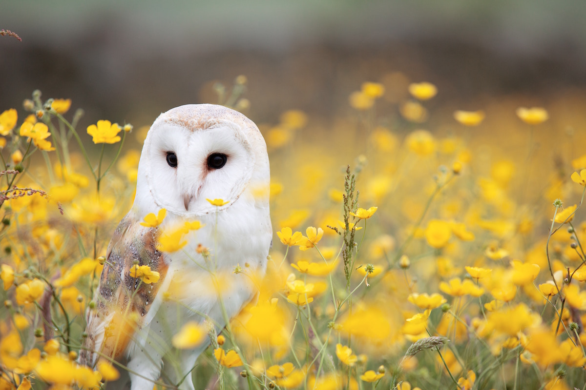 Owl and Flowers